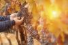 Herbstlaub und Herbstatmosphäre in Italien